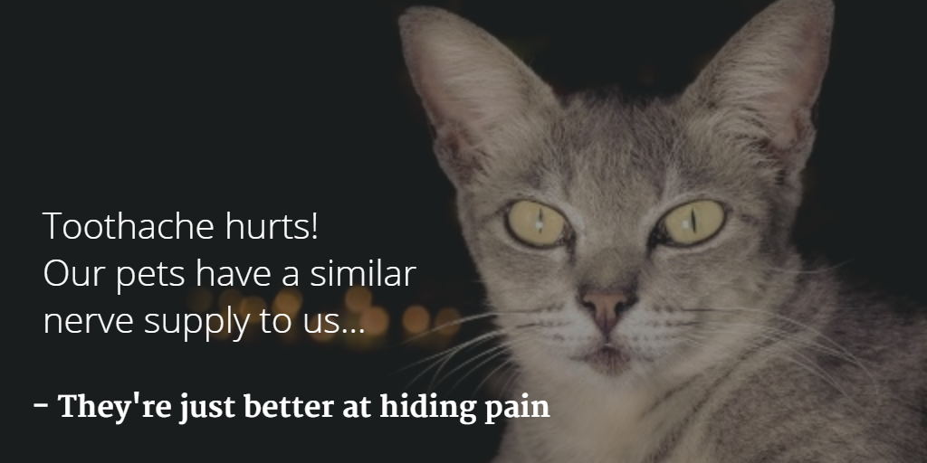 Dental Quotes Alluring Dental Quotes & Images To Share Online With Your Veterinary
