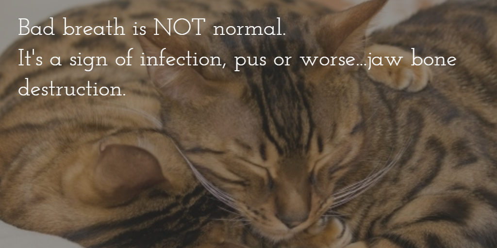 Dental Quotes Enchanting Dental Quotes & Images To Share Online With Your Veterinary