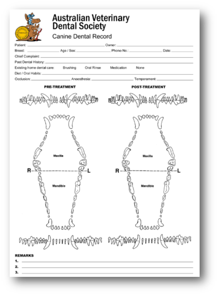 Dog teeth diagram blank search for wiring diagrams veterinary dental charting for dummies blog post rh vetanswers com au blank tooth anatomy printable teeth diagram ccuart Images