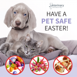 2017 Have A Pet Safe Easter Veterinary Branding 1