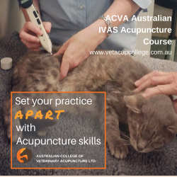 2020 Acva Set Your Practice Apart With Acupuncture Skills Red