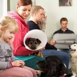 3 Simple Steps For Veterinary Customer Service