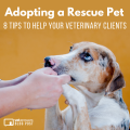 Adopting A Rescue Pet 8 Tips To Help Your Veterinary Clients