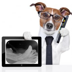 Cant Afford Veterinary Dental Radiology Equipment