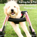 Caring For A Pet With Cerebellar Hypoplasia 1