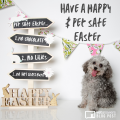 Danger Chocolate Resources To Share With Veterinary Clients Over Easter
