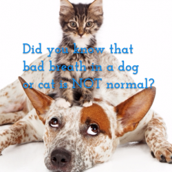 Dental Quotes Images To Share With Your Veterinary Clients During Fatd Vetanswers