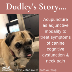 Dudleys Story Acupuncture Case Study Red