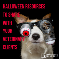 Halloween Resources To Share With Your Veterinary Clients Blog