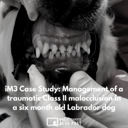 Im3 Management Of A Traumatic Class Ii Malocclusion In A 6mth Old Labrador