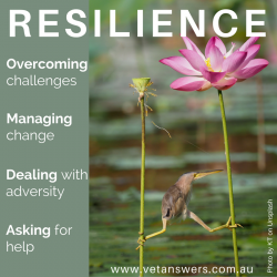 Improving The Resilience Of Your Veterinary Team 2