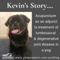 Kevins Story Integrate Acupuncture Into Your Veterinary Clinic