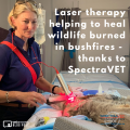 Laser Therapy Helping To Heal Wildlife Burned In Bushfires Thanks To Spectravet 2