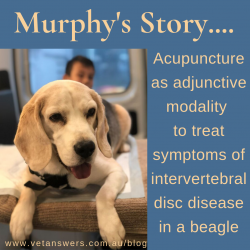 Acupuncture as adjunctive modality to treat symptoms of Intervertebral Disc Disease in a Beagle