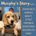 Murphy's Story - Acupuncture Case Study