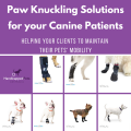 Paw Knuckling Solutions For Your Canine Patients V4
