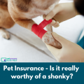 Pet Insurance Is It Really Worthy Of A Shonky Red