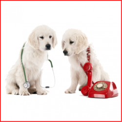 Phone Calls Are The Lifeblood Of Your Veterinary Practice