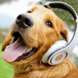 Quick Tip For Your Veterinary Facebook Page Add Music To Video