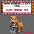 Sharing Your Veterinary Videos Online Whats Stopping You