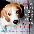 Sorry We Havent Been Around Lately Vetanswers Blog 500x500