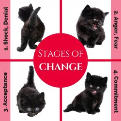 Stages Of Change In Your Veterinary Practice