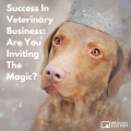 Success In Veterinary Business Are You Inviting The Magic