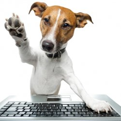 Tasty Tips For Newbie Veterinary Bloggers 1