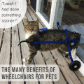 The Many Benefits Of Wheelchairs For Pets