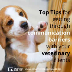 Top Tips For Getting Through Communication Barriers With Your Veterinary Clients Red
