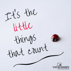 Vetanswers Blog Yes The Little Things Do Matter In Your Veterinary Practice V2