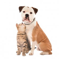 Veterinary Team Member With Unpleasant Body Odour Heres What You Need To Do 2