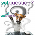 Vetquestion