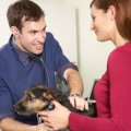 Wellness Plans From A Veterinary Clients Perpective