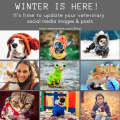 Winter Is Here Its Time To Update Your Veterinary Social Media Images Posts