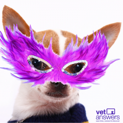 You Never Know Who Your Next Veterinary Client Could Be Disguised As 1