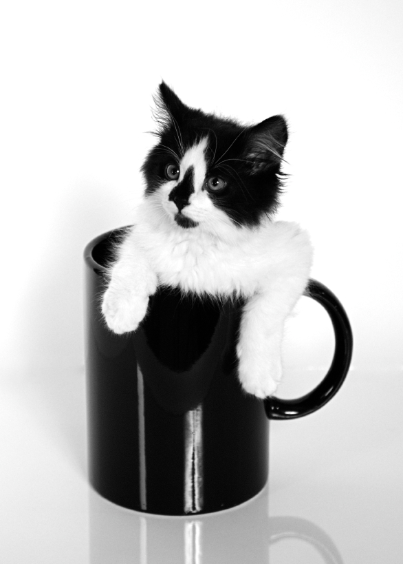 Aww look at the cute kitten in a mug!